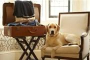 Гостиницы балуют собак и кошек. // bbc.com