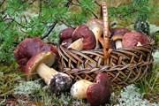 В рамках фестиваля пройдет чемпионат по сбору грибов. // vk.com/event124109522