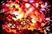 Осень - высокий туристический сезон в Японии. // miuki.info