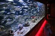 В аквариумах комплекса обитают 5 тысяч рыб. // 24sata.hr