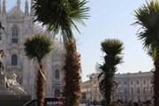 Пальмы на площади Дуомо нравятся не всем. // repubblica.it