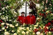Престижное шоу посещают десятки тысяч туристов. // express.co.uk