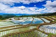 Рисовые поля во Вьетнаме // apiguide, shutterstock