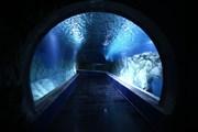 Подводный коридор океанариума Gottesman // Министерство туризма Израиля