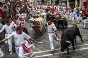 Забеги быков - главное развлечение праздника Сан-Фермин. // The Telegraph