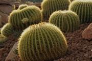 В парке собраны кактусы со всего мира. // desertcity.es