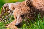 Медведи изгнали туристов из заповедника. // bearworld.ru